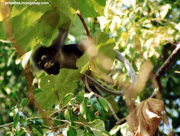 Monos [ Jen Caldwell ]