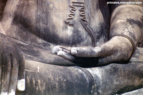 Buddha Tailandés [ Jen Caldwell ]