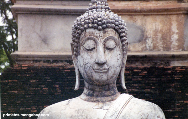 Siamesisches Buddha [ Jen Caldwell ]