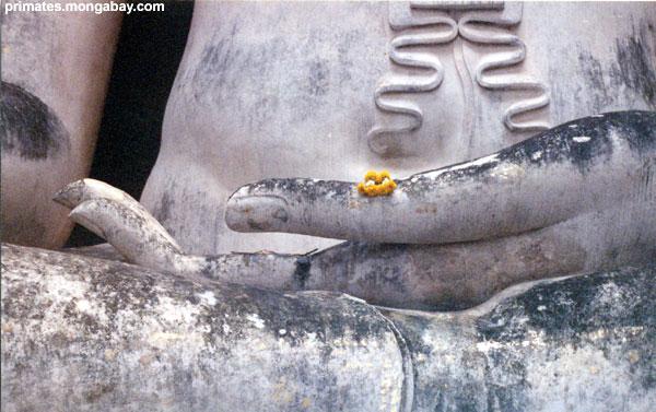 Buddha Tailandese [ Jen Caldwell ]