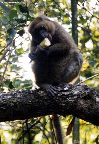 Lemur [ Jen Caldwell ]
