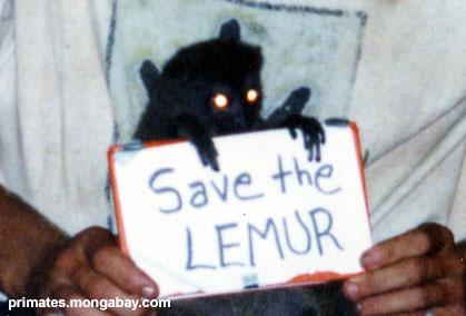 Außer dem Lemur [ Jen Caldwell ]