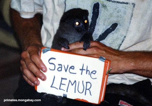 Excepto Lemur [ Jen Caldwell ]